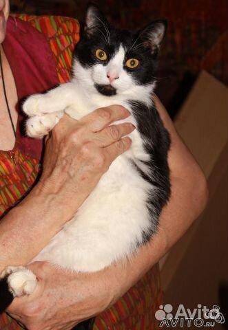 Отдаю кошечку и кота, 8 месяцев