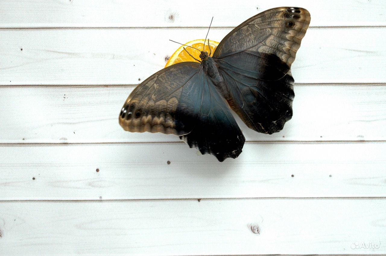 Бабочки тропические