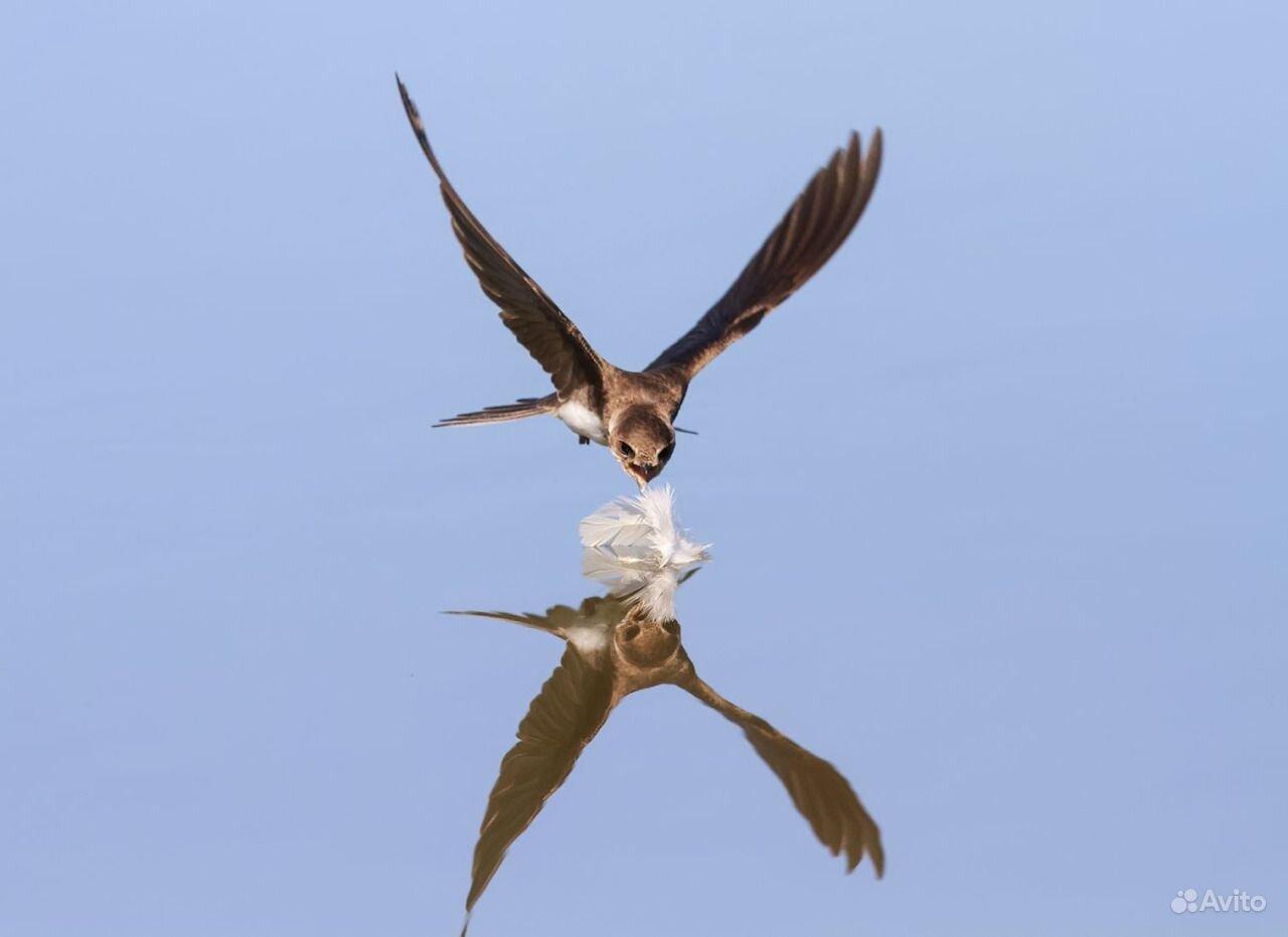 Индюки утки живые