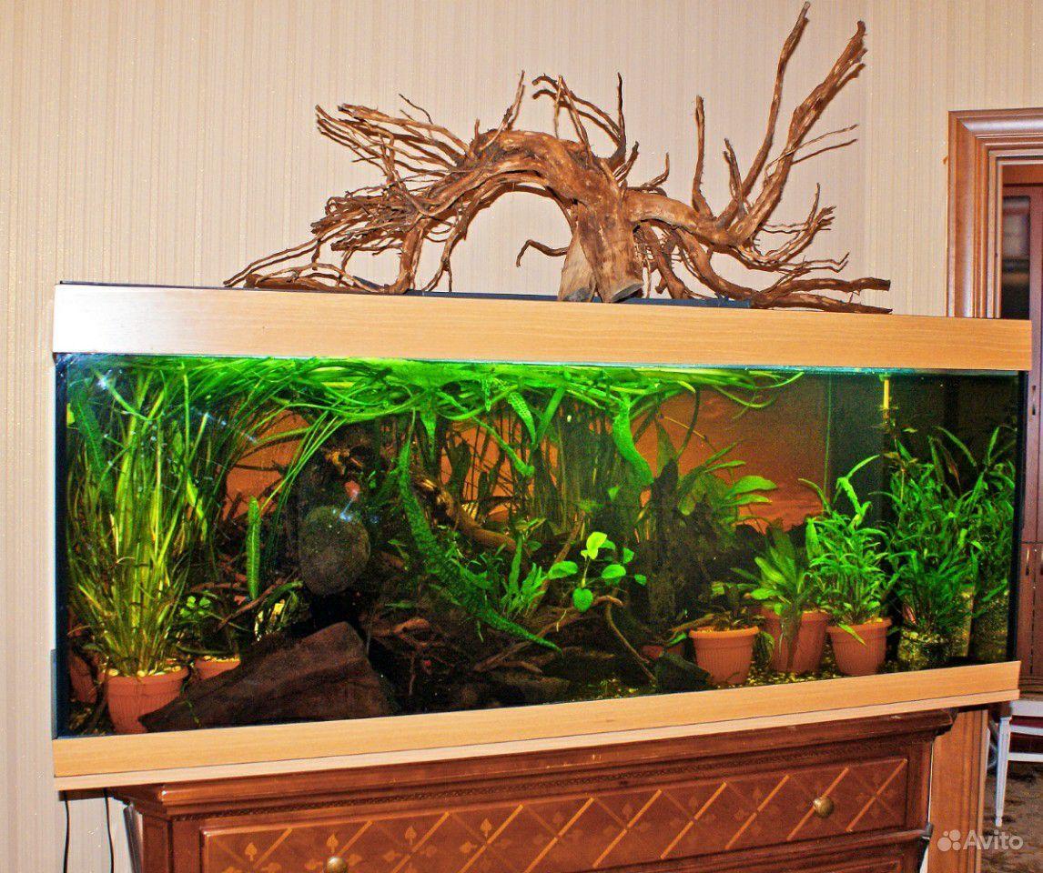 Дизайн аквариума купить на Зозу.ру - фотография № 5