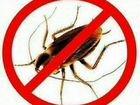 Уничтожение клопов, муравьёв,тараканов,блох