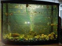 57c3d1bdeb04 Аквариумы - купить рыбок, фильтры и насосы для аквариума в ...