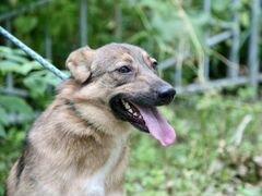 Лучшая собака Милка для вашей семьи