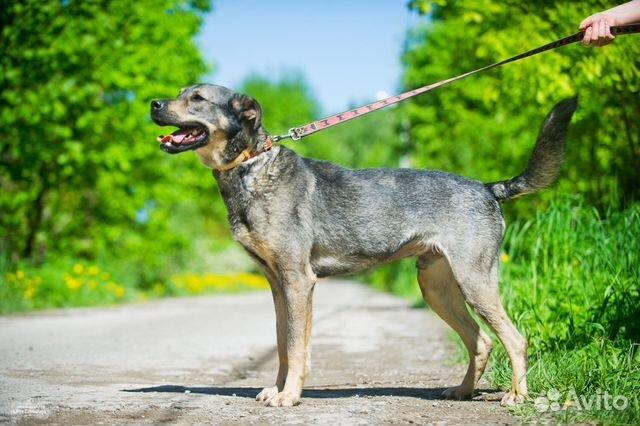 Собака в добрые руки купить на Зозу.ру - фотография № 6