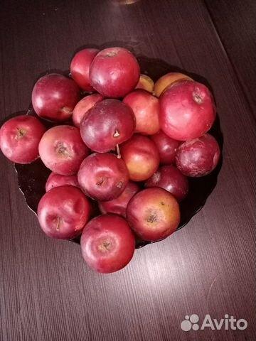 яблоки башкирская красавица