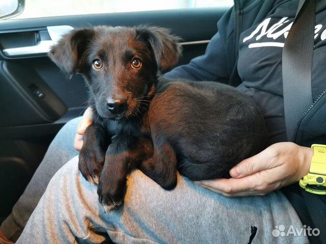 89137249811  Замечательный щенок Филя
