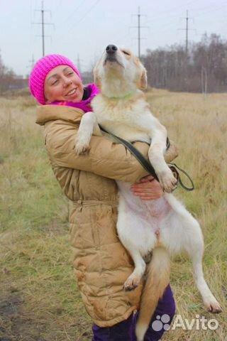 Чудесная собака подросток в дар купить на Зозу.ру - фотография № 5