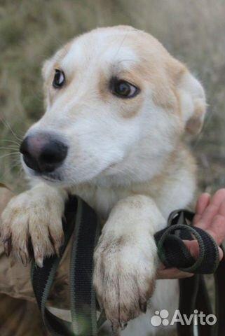 Собака щенок Эви в добрые руки бесплатно купить на Зозу.ру - фотография № 4