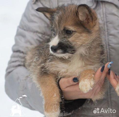 Щенки из приюта купить на Зозу.ру - фотография № 3