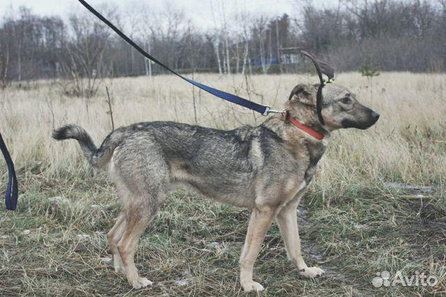 Собака Смайлик в дар купить на Зозу.ру - фотография № 2