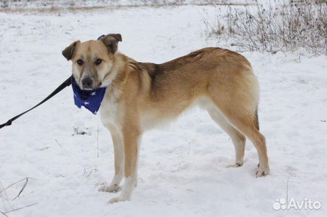 Добрый и внимательный пёс Лари ищет семью купить на Зозу.ру - фотография № 1