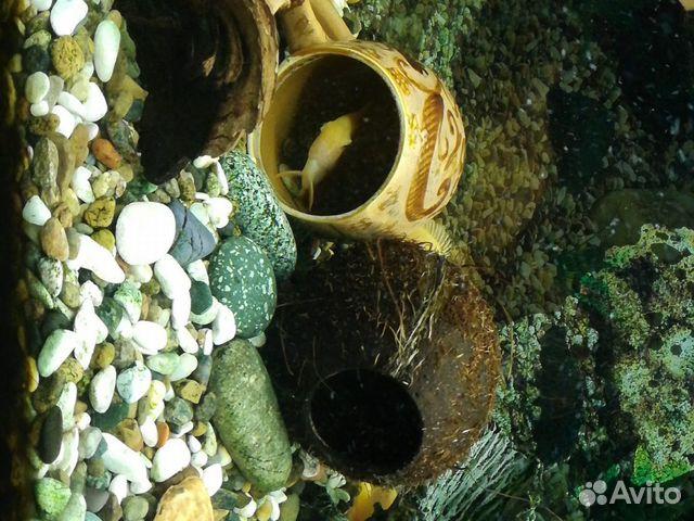 Декор-кокос натуральный  89538576901 купить 2