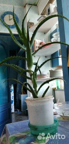 Комнатные растения  89512560859 купить 2