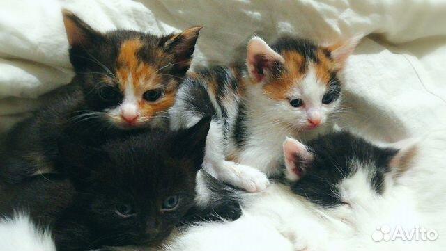 Котята на любой вкус  89879907788 купить 1