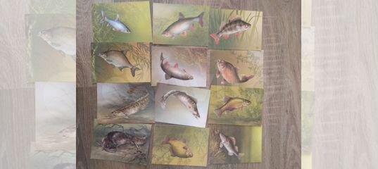 набор открыток рыболову любителю