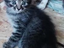 Котята для души