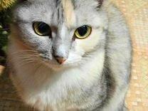 Отдам трехцветную молодую кошечку. Мышеловка