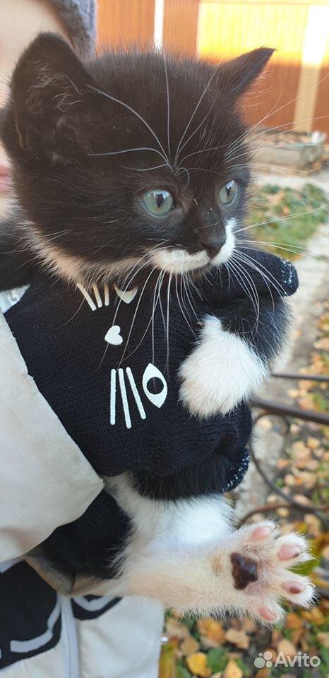 Kätzchen kostenlos in gute Hände  89292004111 kaufen 7