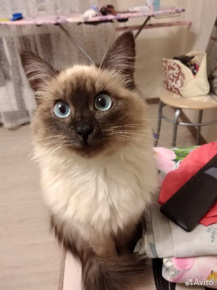 Кошка 89875673264 купить 1