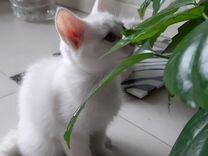 Милые котята в хорошие руки