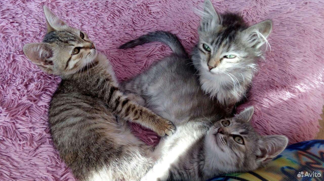 Котята с доставкой  89524383381 купить 3